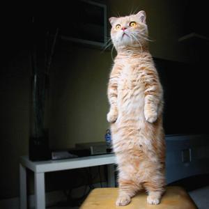 Catstanding