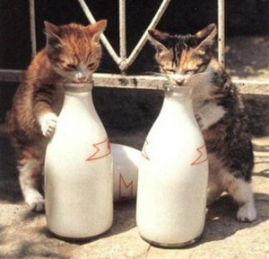 Funnycatpicture1211